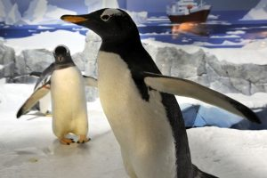 Birmingham Freshers visit sea life centre